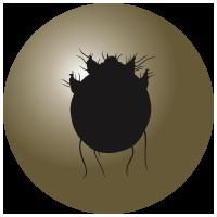 Sarcoptes Mites